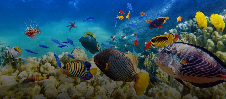 守 さ ろう 豊か 海 の を SDGs 14、海の豊かさを守ろう 金賢守(キムヒョンス) note