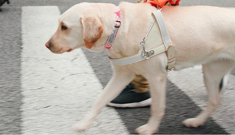 OWNDAYS盲導犬プロジェクト